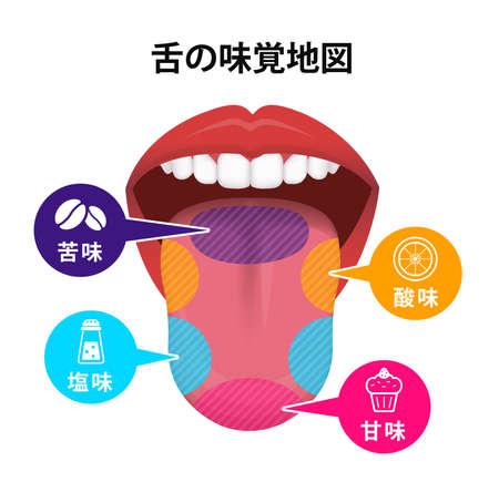 Taste areas of human tongue vector illustration Vektorgrafik