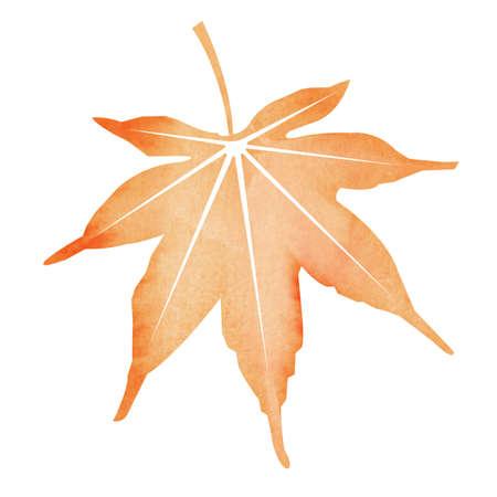 Summer motif watercolor painting illustration for summer greeting card etc.   maple leaf 版權商用圖片