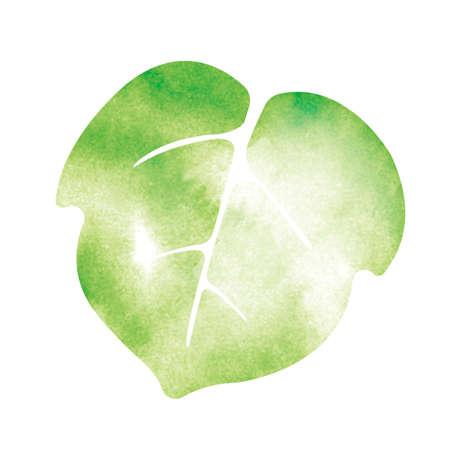 Summer motif watercolor painting illustration for summer greeting card etc.   morning glory leaf 版權商用圖片