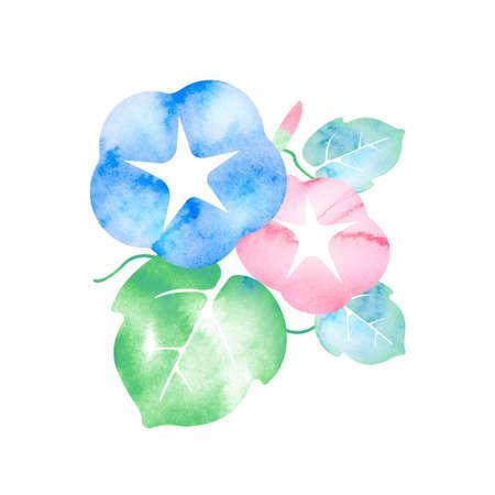 Summer motif watercolor painting illustration for summer greeting card etc.   morning glory flower 版權商用圖片