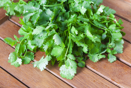 Coriander (Coriandrum sativum), also known as cilantro Banco de Imagens