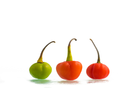 bode: Bode Pepper. Capsicum chinese isolated on white background