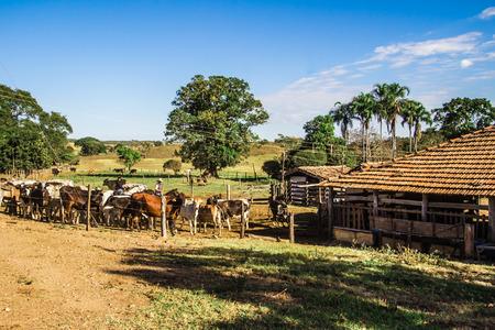 ranch background: Pirenopolis, Brazil - July 1, 2017: Cattle breeding. Brazilian Farm in Pirenopolis, Goias, Brazil Editorial