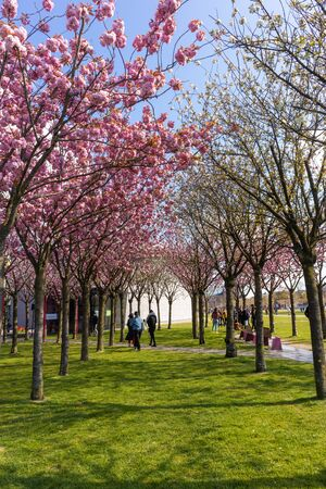 AMSTERDAM, NETHERLANDS - APRIL 13, 2019: Museums Park in Amstedam on a beautiful blue day