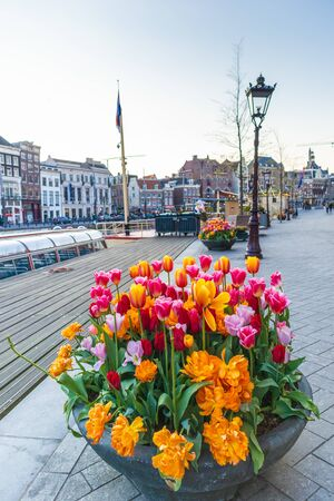 AMSTERDAM, NETHERLANDS - APRIL 12, 2019: Beautiful tulips in the center of Amsterdam, Netherlands