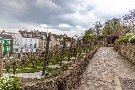 Paris, France - APRIL 8, 2019: Grape plantation in sacre coeur, Paris, France, Europe 報道画像