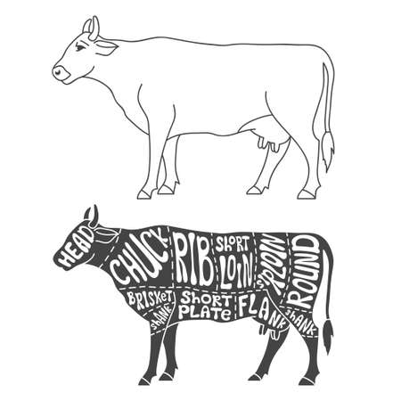 beef cuts: Beef cuts diagram. Hand drawn butcher cuts scheme