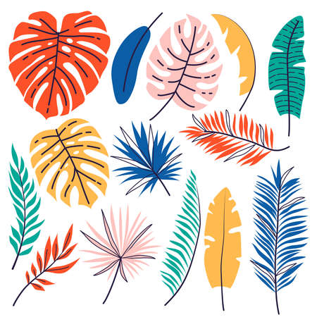 Set of hand drawn tropical leaves. Floral foliage, palm tree branch, jungle leaves Illustration