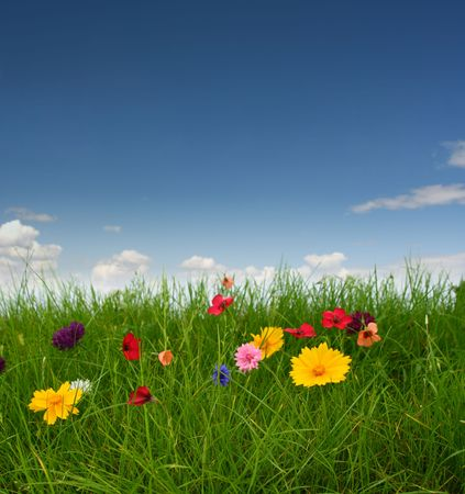 Flowers on the green grass Stock Photo - 5706685