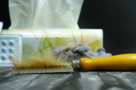allergens: Allergy relief concept, home pets hair and dust as  allergens, medication and paper tissues, copy space Stock Photo