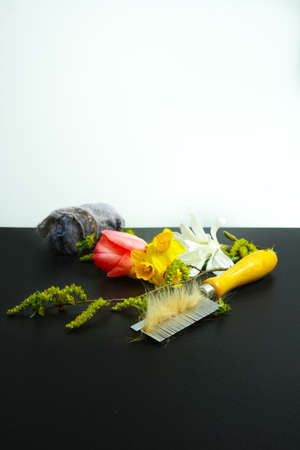 allergens: Allergy concept, seasonal allergens - pollen and flowers, pet hair and home dust, copy space