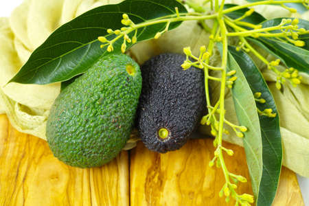 olive green: Fresh green avocados with leaves on olive wood cutting board