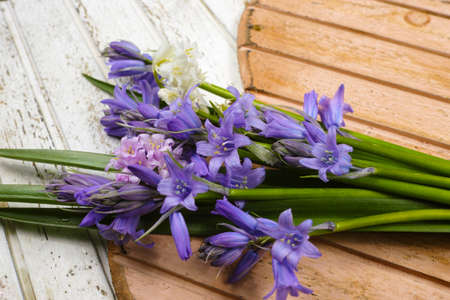Bunch of fresh wild flowers hyacinths from the forest on wooden hearts Reklamní fotografie