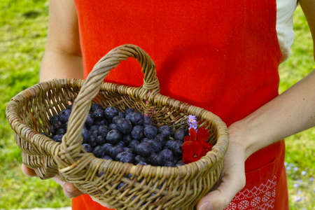 picnick: Young woman in red apron holding wicker basket witn fresh blueberry Stock Photo