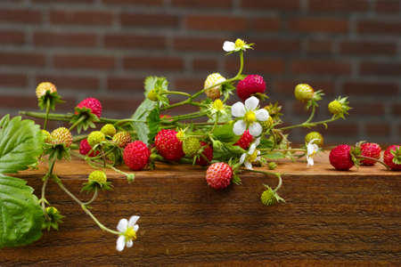 vitamines: Bunch of ripe red wild strawberries on wooden background Stock Photo