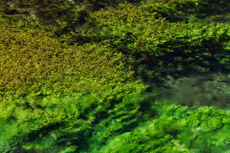 Emerald green flowing river water with seewead, abstract background, river Sourge, Fontaine-de-Vaucluse