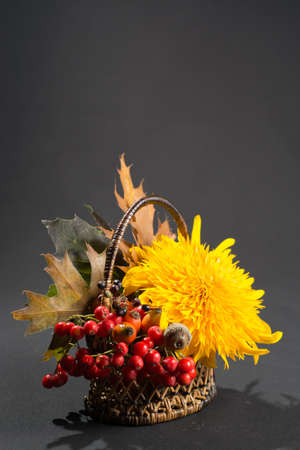 sorbus: Floral still life with yellow sunflower and orange sorbus in autumn colors on dark background Stock Photo