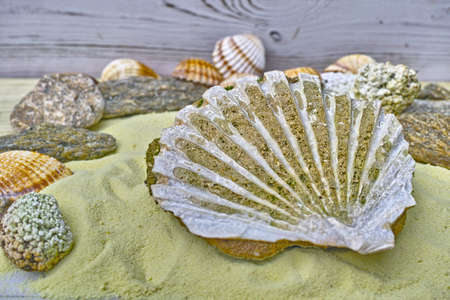 Big sea shell fossil on the yellow sand close up
