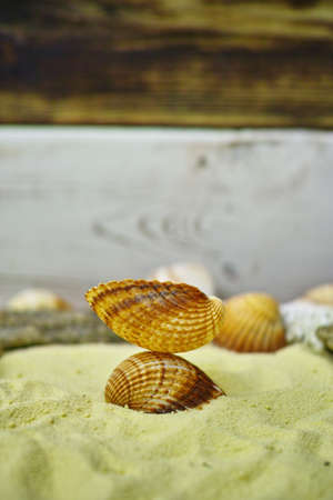 Shells and stones on the yelllow sand