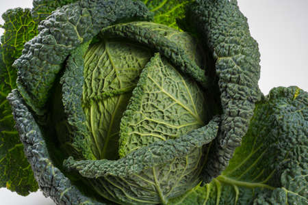 Whole head of green organic savoy cabbage over white background