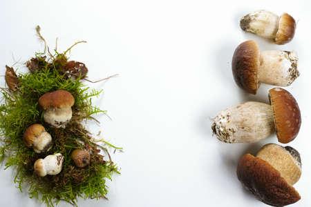 Fresh wild porcini mushrooms (boletus edulis) on white background copy space
