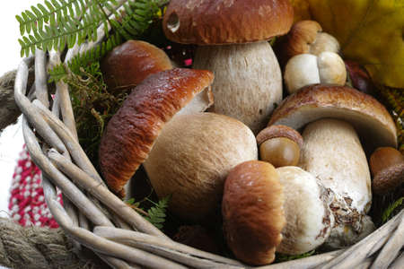 Fresh wild porcini mushrooms (boletus edulis) in wicked basket with yellow leaves Banque d'images