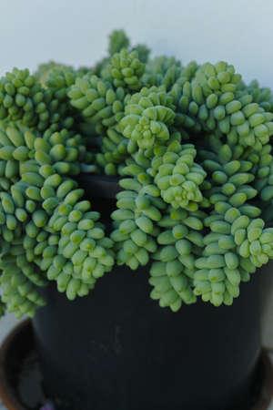 ollas de barro: Evergreen plantas suculentas tropicales en olla de barro en Tenerife en invierno Foto de archivo