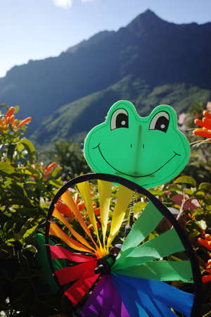 Colorful wind weather vane green frog on green background