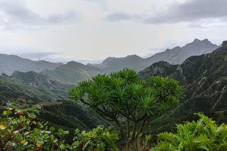Strada TF-12 nel parco rurale di Anaga - cime sempreverdi con foresta antica su Tenerife, Isole Canarie, destinazione del viaggio invernale