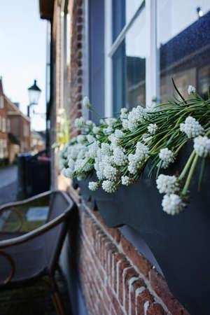 noord: Spring white flowers on the window on the old Dutch street, Heusden, Noord Brabant