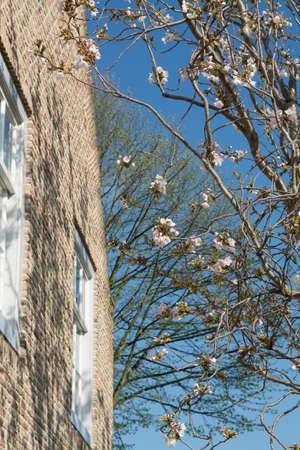 noord brabant: Spring white flowers on the window on the old Dutch street, Heusden, Noord Brabant