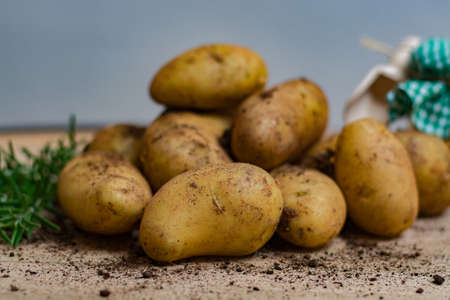 New harvest - young raw potatoes uncooked close-up Stock Photo