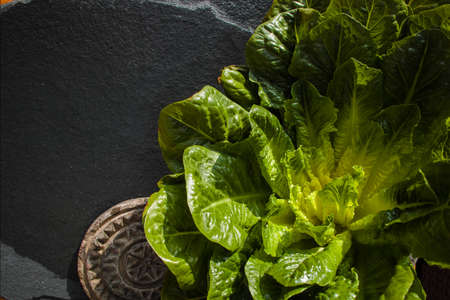 Green romaine lettuce – source of vitamins, ready to eat