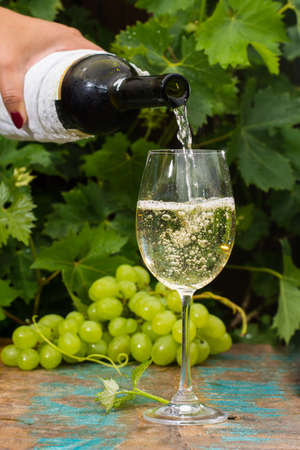 Waiter pouring a glass of ice cold white wine, outdoor terrace, wine tasting in sunny day, green vineyard garden background and white grape