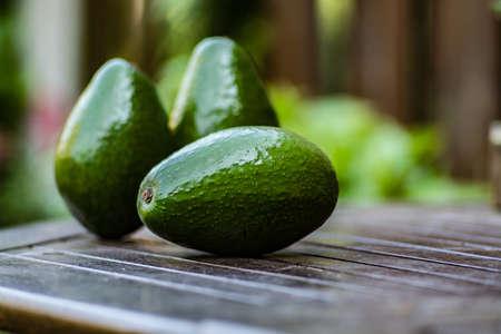 close up food: Green ripe avocado from organic avocado plantation