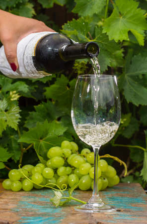 degustation: Waiter pouring a glass of ice cold white wine, outdoor terrace, wine tasting in sunny day, green vineyard garden background and white grape