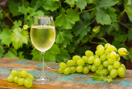 Wine glass with ice cold white wine, outdoor terrace, wine tasting in sunny day, green vineyard garden and white grape