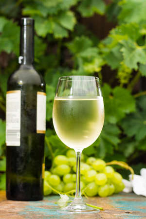 Wine bottle and wine glass with ice cold white wine, outdoor terrace, wine tasting in sunny day, green vineyard garden background and white grape
