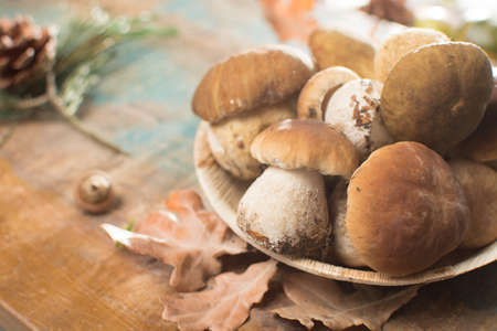 Tasty food - fresh porcini boletus oak muchrooms, high quality, ready to cook with rice, potatoes and in soup Stock Photo