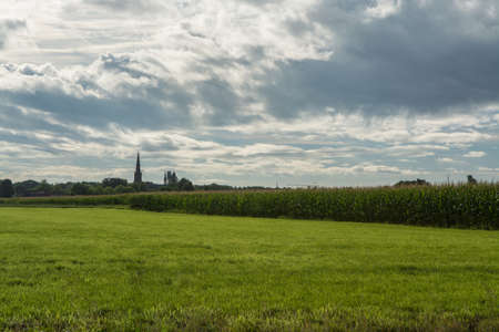 Dutch farmland, landscape with old church tower and green corn fields