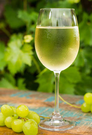 Wine glass with ice cold white wine, outdoor terrace, wine tasting in sunny day, green vineyard garden background and white grape
