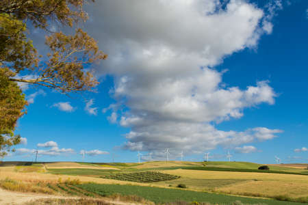Panoramic view on yellow fields with ripe hard wheat and blue sky, grano duro, Sicily, Italy