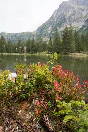 Small forest lake in Alpen mountains, place for walking, relaxation and tranquil vacation Stock Photo