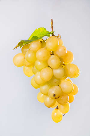 white washed: Bunch of large organic table white grapes on light gray background