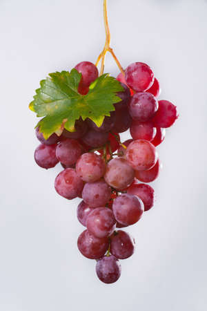 Bunch of large organic table grapes Red Globe  close up