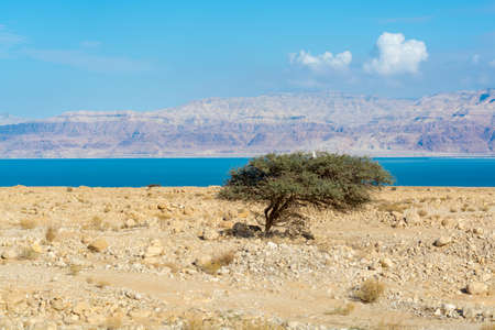 Lowest salty lake in world below sea level Dead sea, full of minerals near luxury vacation resort Ein Bokek, perfect place for medical treatments, climatotherapy, thalassotherapy and heliotherapy.