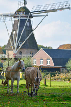 Landscape with traditional Dutch grain windmill and two horses, Veldhoven, North Brabant Stock Photo