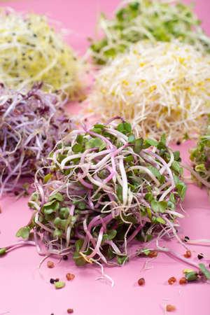 Vegetarische Zutat für gesunde Ernährung für Salate, junge Sprossen von Lauch, Radieschen, Brokkoli, Alfa Alfa, Mostard, Kresse aus der Nähe Standard-Bild