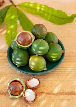 New harvest of ripe fresh Australian macadamia nuts in shell with leaves close up 版權商用圖片