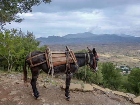 Traditional transportaion on Crete, black donkey works as taxi for tourists, Greece 免版税图像